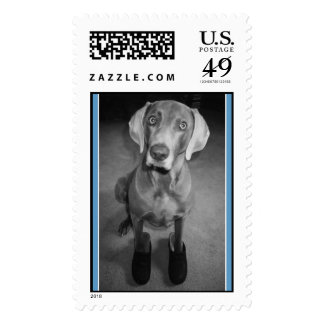 """""""Dog in Clogs"""" - postage stamp"""