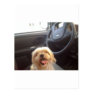 Dog in Driver's Seat Postcard