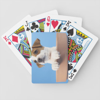 Dog in flowerpot bicycle playing cards