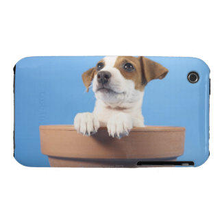 Dog in flowerpot iPhone 3 cover