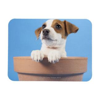 Dog in flowerpot magnet