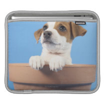 Dog in flowerpot sleeve for iPads