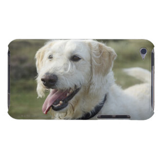 Dog in heath land. barely there iPod cases