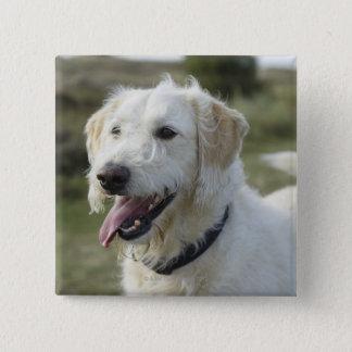 Dog in heath land. pinback button