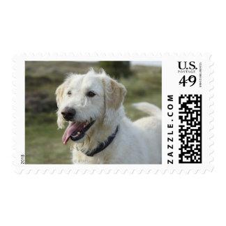 Dog in heath land. postage stamp