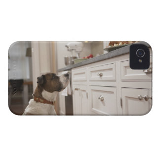 Dog in kitchen looking at food on counter Case-Mate iPhone 4 case