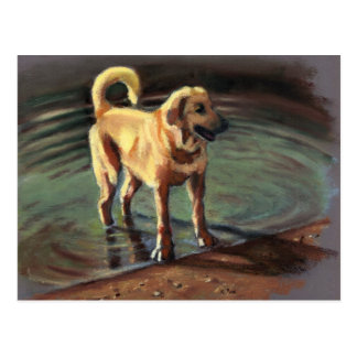 DOG IN LAKE: PASTEL ART: POSTCARD