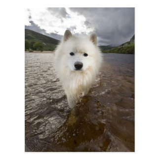 Dog in lake postcard