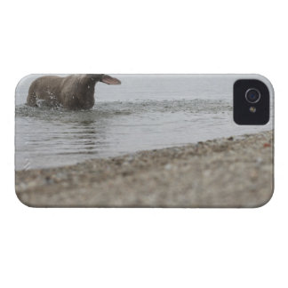 Dog in Lake Shaking Off Water iPhone 4 Case