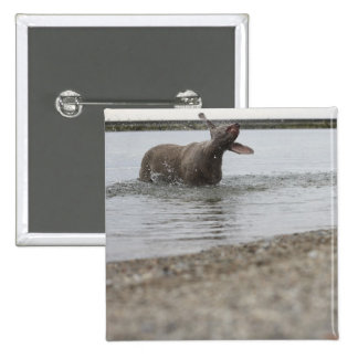 Dog in Lake Shaking Off Water Pinback Button
