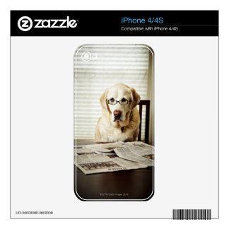 Dog in morning routine iPhone 4 decal