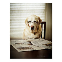 Dog in morning routine postcard