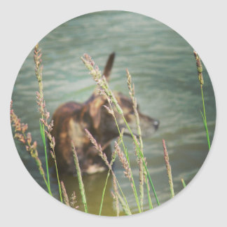 Dog in Pond Abstract Photography Classic Round Sticker