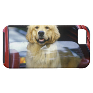 Dog in red car window iPhone SE/5/5s case