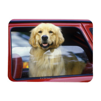 Dog in red car window magnet