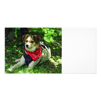 Dog in Red Scarf Photo Card
