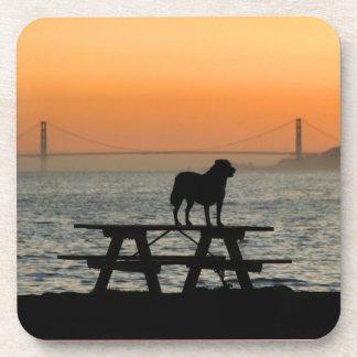 Dog in San Francisco Sunset Beverage Coaster