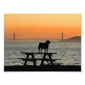 Dog in San Francisco Sunset Photographic Print