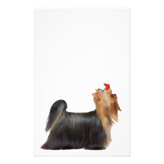 Dog in show stationery