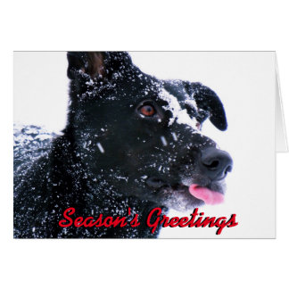 Dog in snow Christmas card