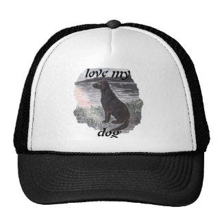 Dog in sunset trucker hat