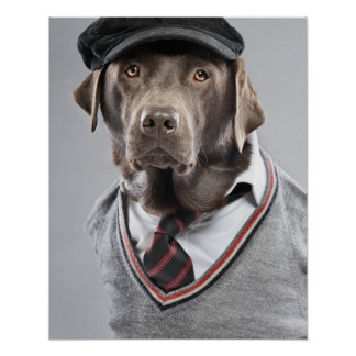 Dog in sweater and cap poster