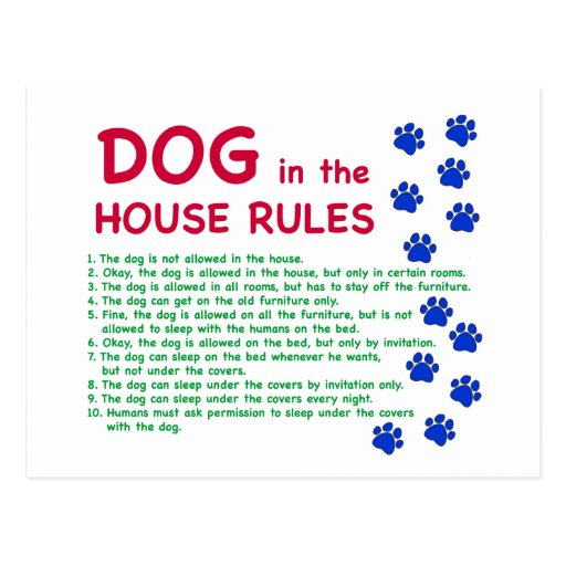 dog in the house rules rules to live by postcard zazzle how to create an interior design mood board in minutes