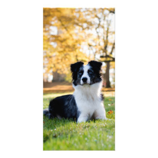 Dog in the Nature Card