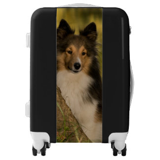 Dog in the Nature Luggage