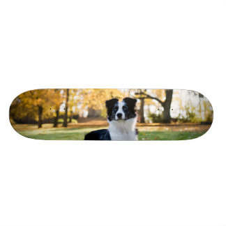 Dog in the Nature Skateboard Deck