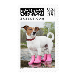 Dog In The Rain Postage Stamps
