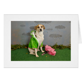 Dog in the rain with umbrella, wearing raincoat card