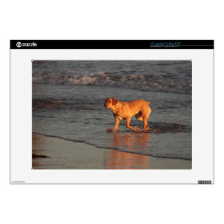 "Dog in the Sea 15"" Laptop for PC and Mac Skin"