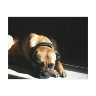 Dog in the Sun Stretched Canvas Prints