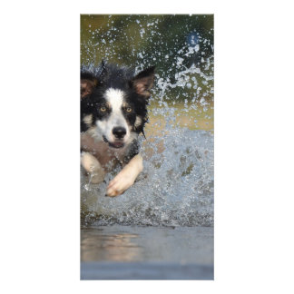 Dog in the Water Card