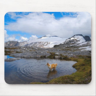 Dog in the water, in Canada.  Mousepad