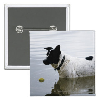 Dog in Water with Tennis Ball Pinback Buttons