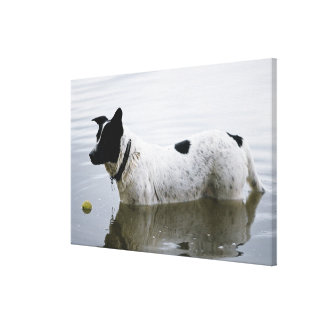 Dog in Water with Tennis Ball Canvas Print