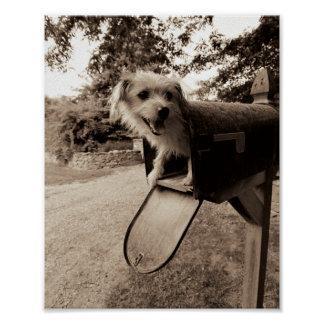 Dog Inside a Mailbox Poster
