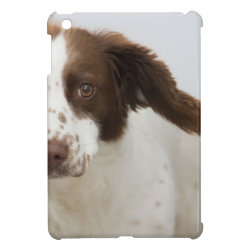 Case Savvy iPad Mini Glossy Finish Case with Springer Spaniel Phone Cases design