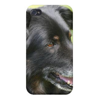 dog iPhone 4/4S case