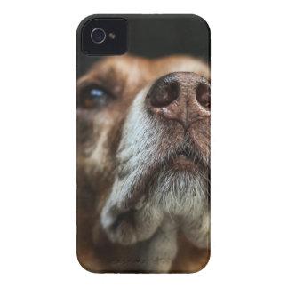 dog iPhone 4 Case-Mate case
