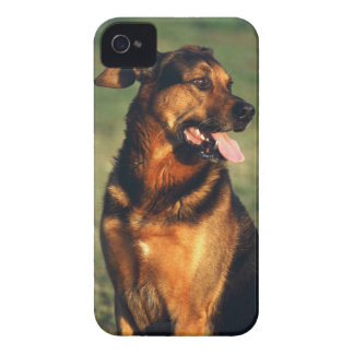 dog iPhone 4 Case-Mate cases