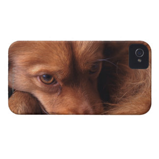 dog iPhone 4 cover