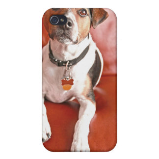 dog iPhone 4/4S covers