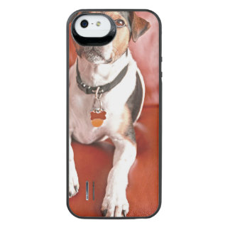 dog uncommon power gallery™ iPhone 5 battery case