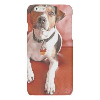 dog matte iPhone 6 case