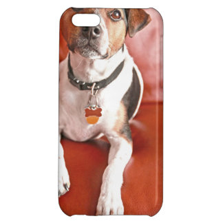 dog iPhone 5C covers