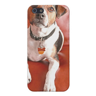 dog cases for iPhone 5