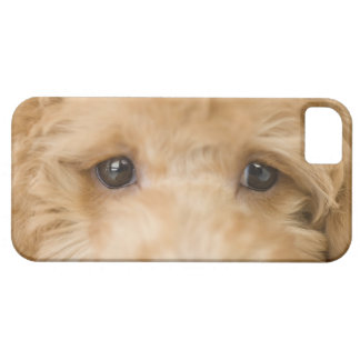 Dog iPhone SE/5/5s Case